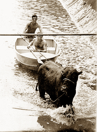 Os bombeiros foram chamados e decidiram conduzir o boi até a praia. Para isso, contaram com um bote salva-vidas.