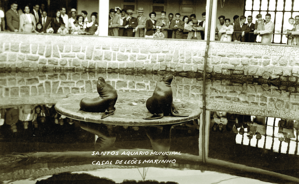 Imagem do primeiro casal de leões marinhos do Aquário Municipal de Santos.
