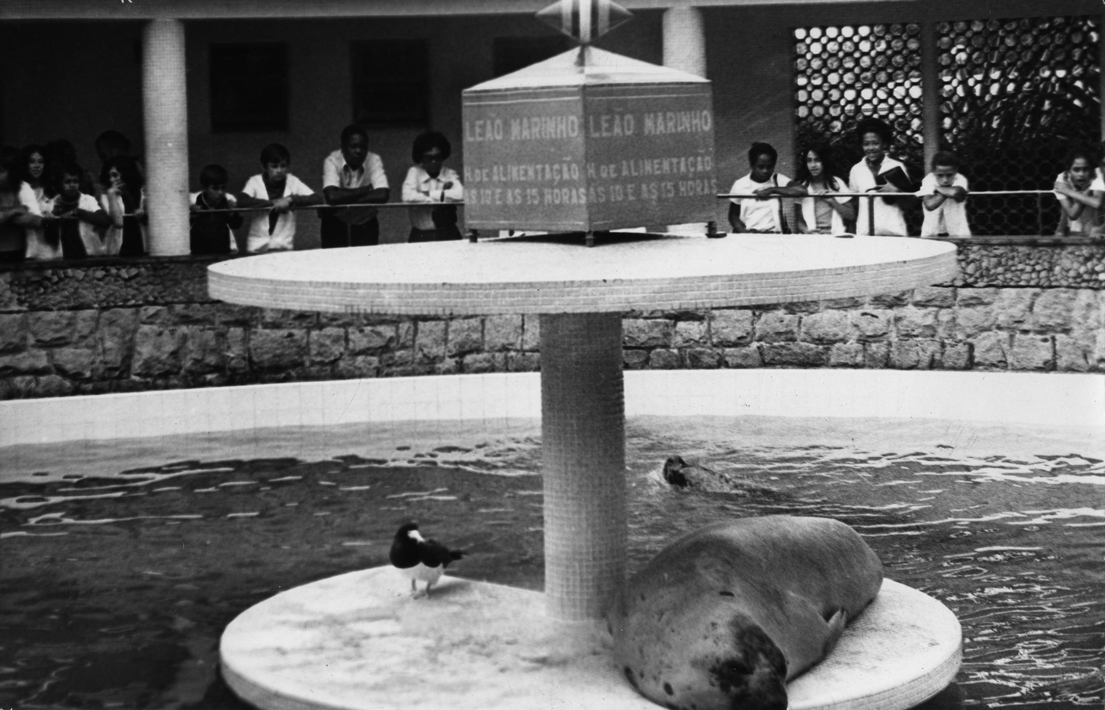 Foca Krikri deitada no centro do tanque, na plataforma