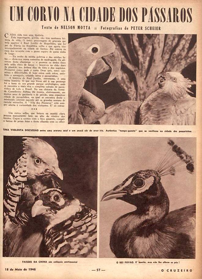 Revista O Cruzeiro, uma das mais influentes do Brasil, fez matéria ampla sobre a Vila dos Pássaros, em Santos.