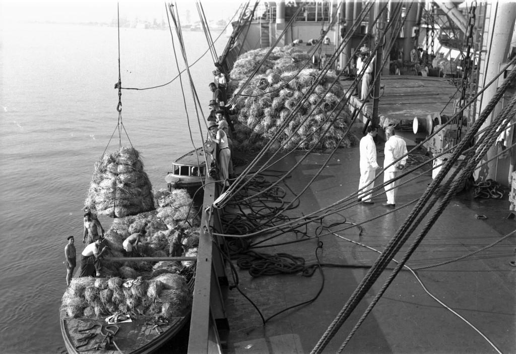 Embarque de banana no Porto de Santos nos anos 1950. Para proteger os cachos, eram utilizadas fibras de bananeira.