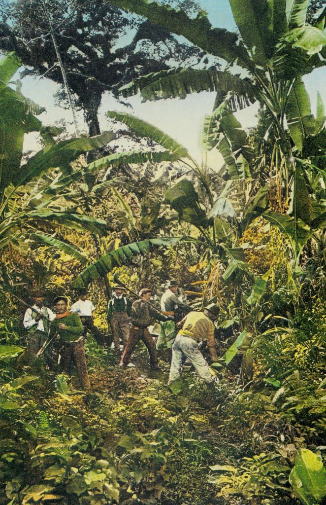 Plantação de Banana nos arredores de Santos no começo do Século 20.