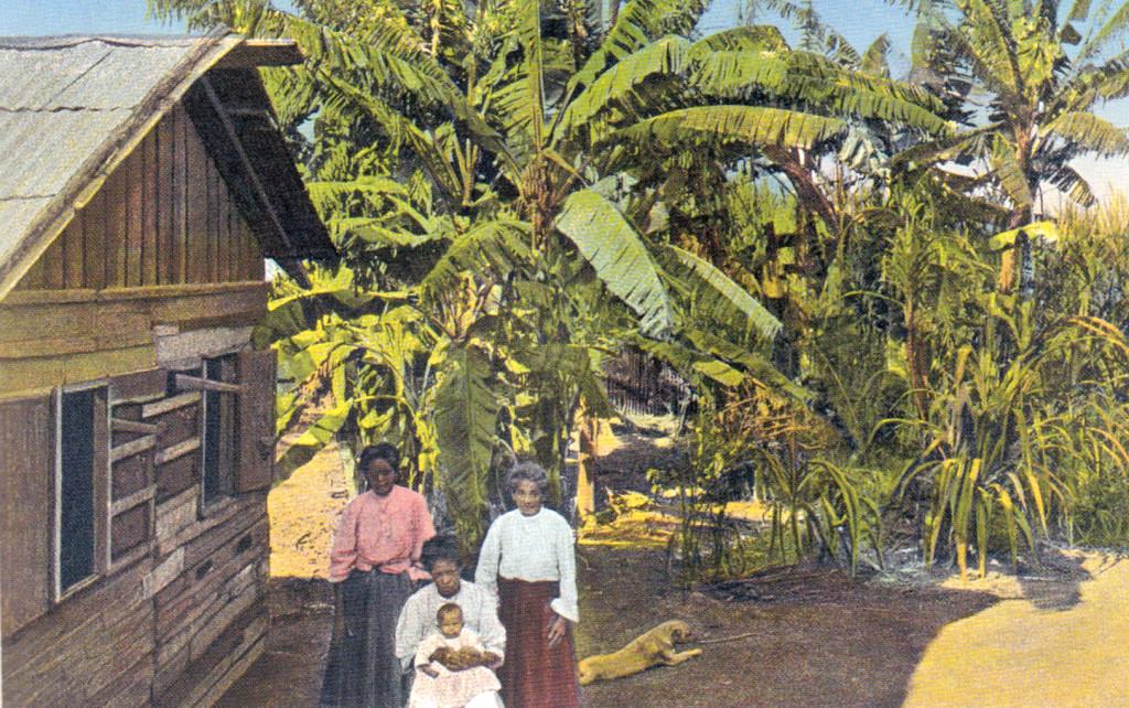 Casa caiçara ao lado de bananal, início do século 20.