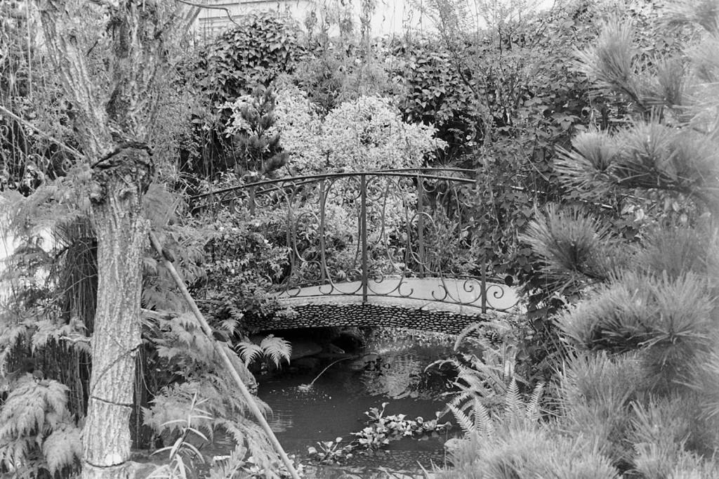 Outro ângulo do jardim de entrada e do lago.